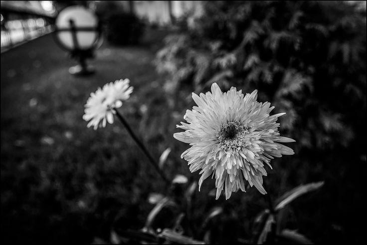 https://www.flickr.com/photos/dmitryzhkov/shares/U31C47 | Dmitry  Ryzhkov's photos