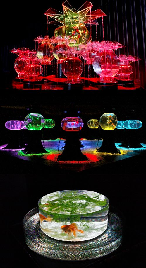 東京・日本橋 | Art Aquarium | アートアクアリウム