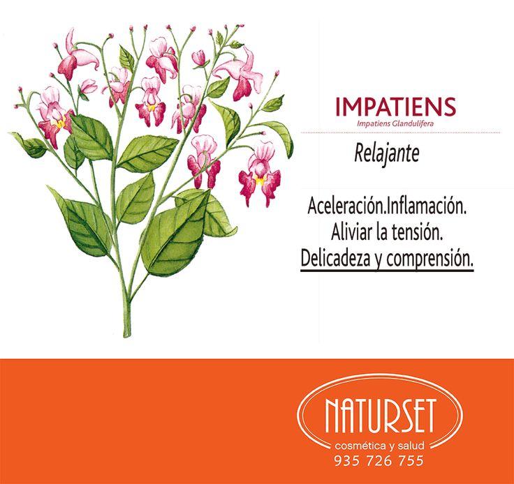 Impatiens: Relajante. Flores de Bach de Naturset