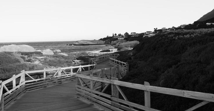 Boulder Beach, Simon's Town, Near Cape Town, South Africa
