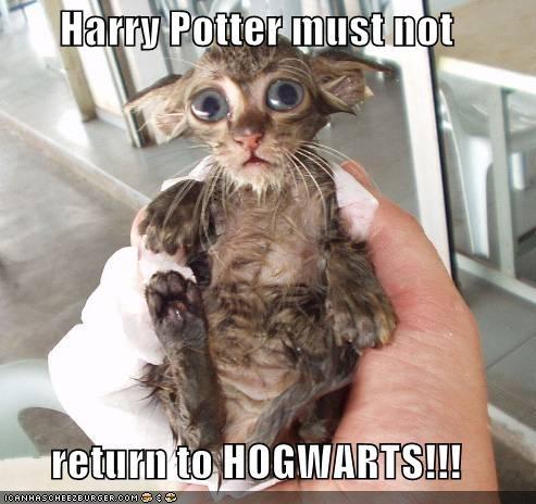 Harry Potter must not  return to HOGWARTS!!!Harry Potter Jokes, Cat, Real Life, Harry Potter Funny, Harrypotter, Kittens, Harry Potter Humor, So Funny, Animal