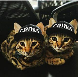 CrimeCats / ApeCrime