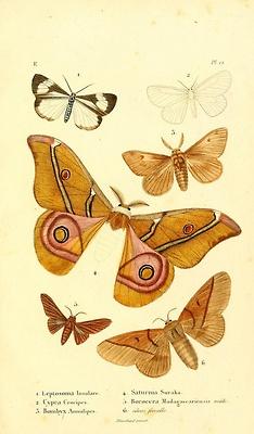 Scientific Illustration