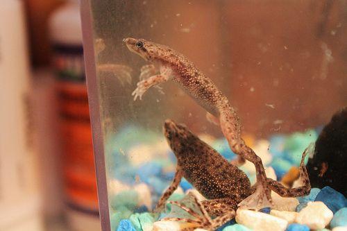 Pet Ideas for 5 and 10 Gallon Aquarium Tanks
