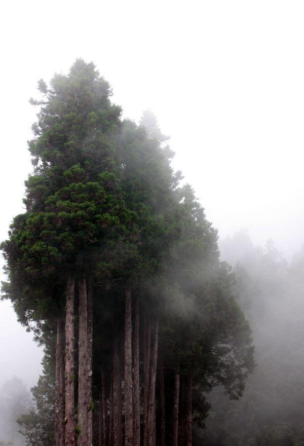 '숲'이 느껴지는 사진 trees in the fog
