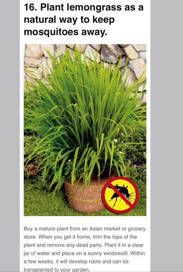 100 best images about outside ideas on pinterest gardens for Best plants to keep mosquitoes away