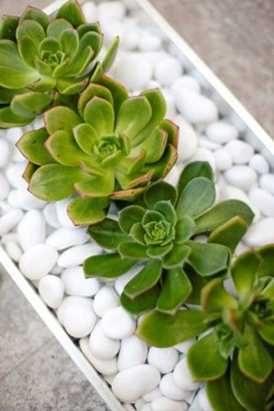 Recreate this crisp, stunning, and simple design with a handful of organic pieces. Utilize a rectangular clear glass vase as your sleek foundation. Fill your vessel with white cobble stones, incorporating stark color and eye-catching detail. Finally, secure several artificial succulent blossoms in the stones,