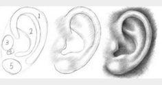 Kulak çizimi