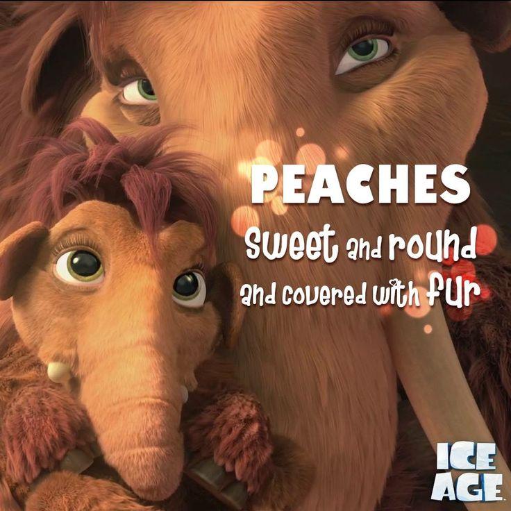 13 Best Ice Age Memes Images On Pinterest Memes Humor