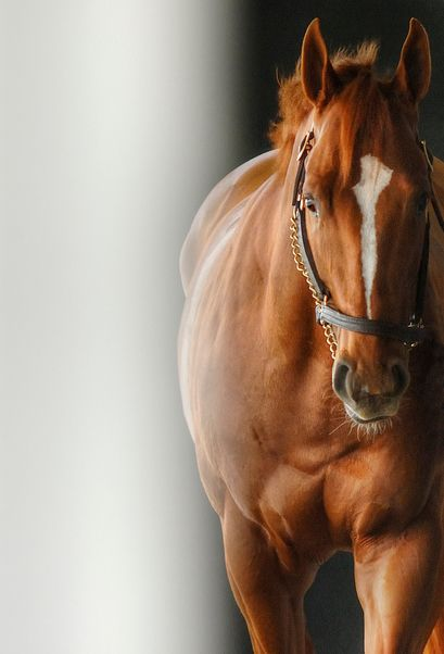thehorsegodbuilt: Curlin ............................... Don't be ridiculous............. The horse that God built is Secretariat.  Period!
