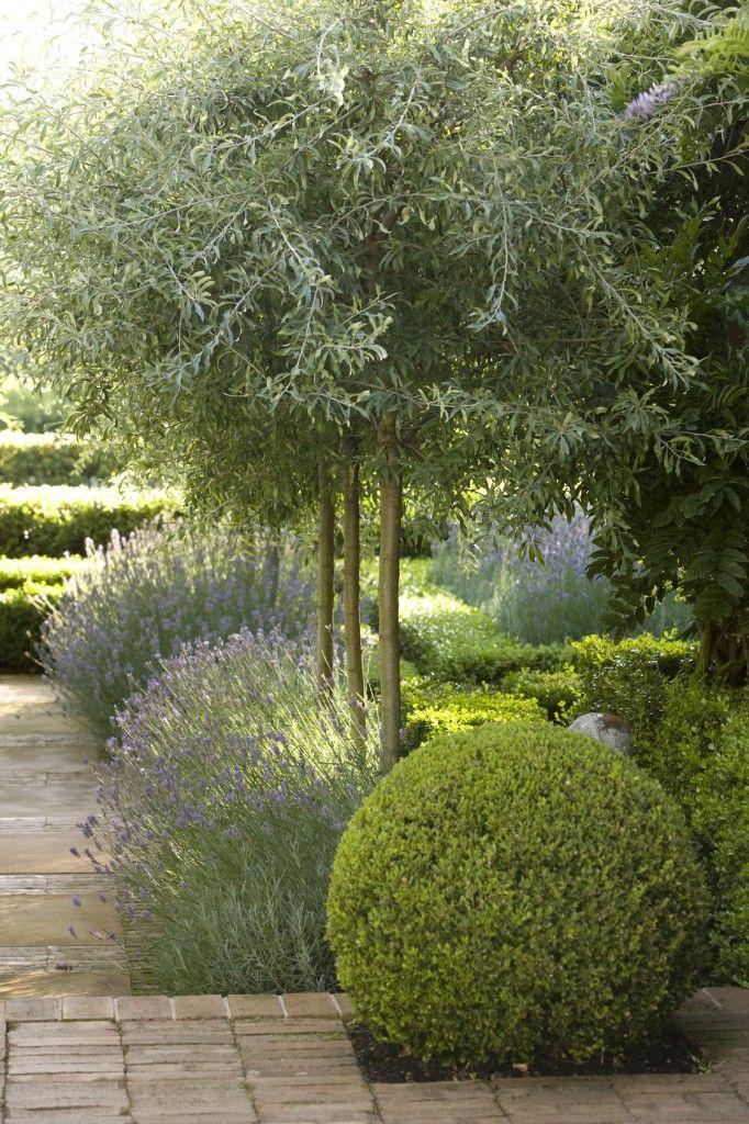 le chemin avec les lavendins et arbustres/buis