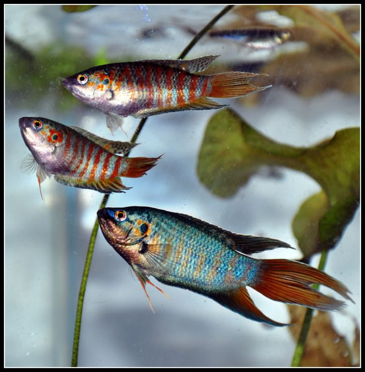 Best 25 tropical fish store ideas on pinterest for Exotic fish store