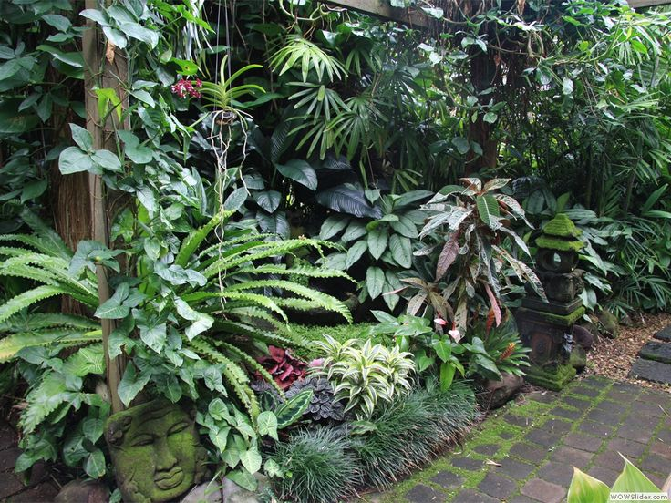Pathway in subtropical garden