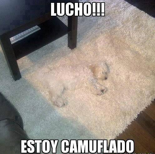 0341-Lucho-Camuflado.jpg (495×490)