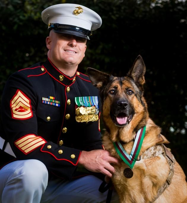 Retired U.S. Marine Corps dog Lucca receives the Dickin Medal for gallantry during her six-year career, with her owner, Gunnery Sgt. Christopher Willingham, at the Wellington Barracks, London. (Photo: David Tett/PDSA)