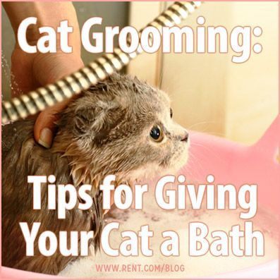 Bathing your cat can be a tough process–nothing seems to bring out the claws quicker than the sound of running water. In order to keep this event as safe as possible for you and your cat, keep the following tips in mind.  #cats #grooming