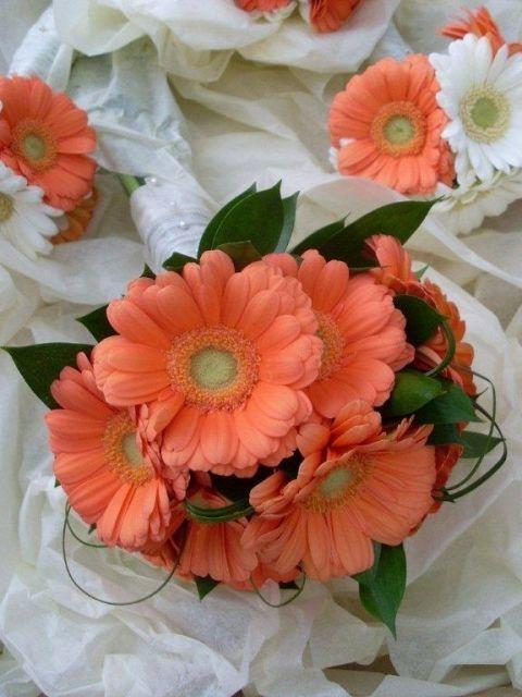 Gerbera Daisy Centerpieces   Coral gerbera daisy bouquets.   wedding