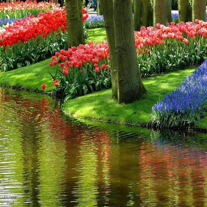 Spring!  This looks like Ottawa, Canada at the Tulip Festival...