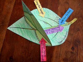 Photosynthesis Model...looked like some other great science ideas for upper grades on this blog.