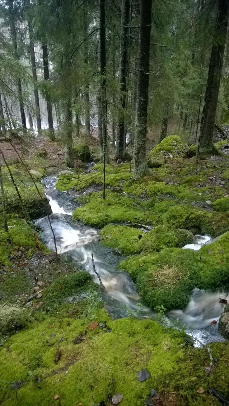 Nuuksion kansallispuisto 7.11.2014