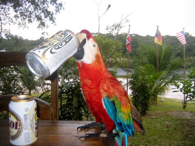 Drunk and disorderly birds are becoming a public nuisance. | 15 Signs That Bird Society Is Going To Hell