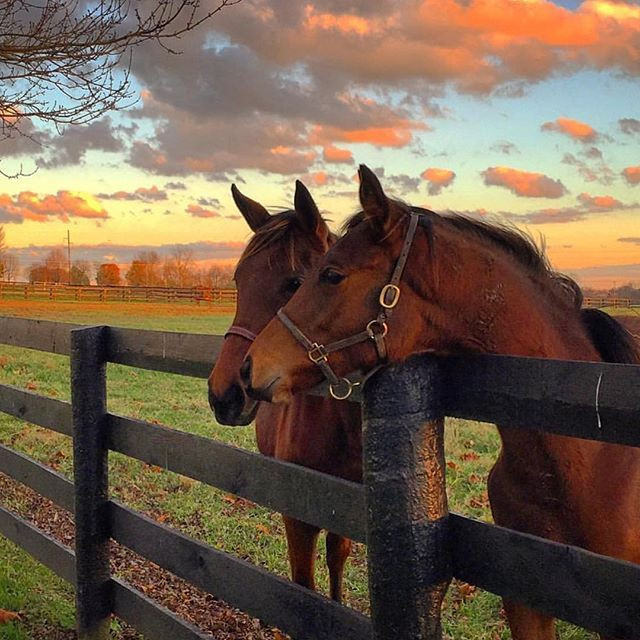 """Just hanging out with a good friend on a beautiful Kentucky Fall day.""   (Photo By: Instagrammer @caitcourt88 #TravelKY #kentucky #horsecountry )"