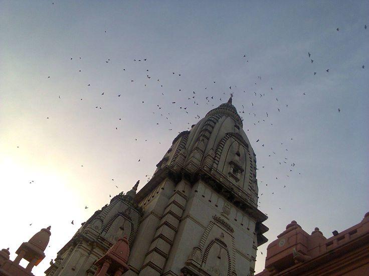 Birds in the evening sky around Vishwanath Temple Banaras Hindu University