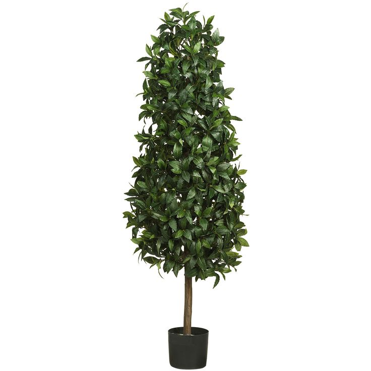 5ft Sweet Bay Pyramid Silk Tree - A symbol of honor and victory, this delightful Mediterranean creation has a unique, charming appeal. Rich dark green leaves form a lush triangular bloom which rests gracefully upon a slender authentic looking trunk. A member of the evergreen family, this Sweet Bay pyramid silk tree makes a nice alternative to a traditional Christmas tree when draped with white lights. For double the pleasure, display two of these extraordinary trees outside your doorway…