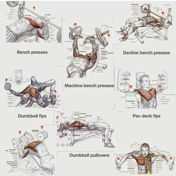 Try this intense chest workout for all round chest workout!  ___________________________________  #gym #motivation #lifter #beast #training #diet #body #aesthetics #paleo #exercises #lift #fitness #gains #funny #coach #muscle #gymshark #followforfollow #daily  #jokes #motivational #motivationalquote #likeforlike #gymjokes #gymlife #gymproblems by gymhigh
