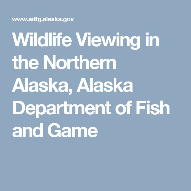 Wildlife Viewing in the Northern Alaska, Alaska Department of Fish and Game