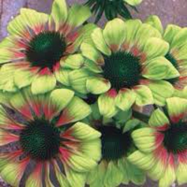 17 best images about flowering wishes on pinterest green. Black Bedroom Furniture Sets. Home Design Ideas