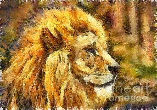 Barbary Lion Drawing