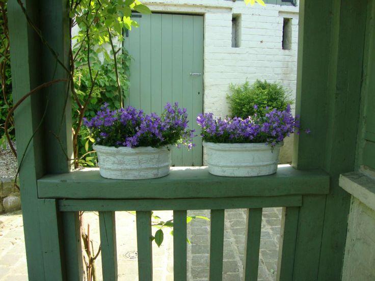 En été, de belles campanules apportent un touche de couleur supplémentaire au jardin.