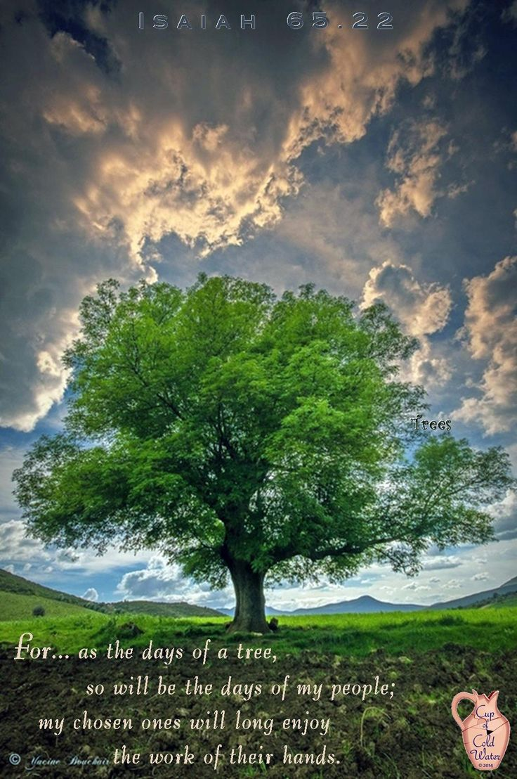 Tree #18 is based on Isaiah 65.22, the tree of Life's Labor
