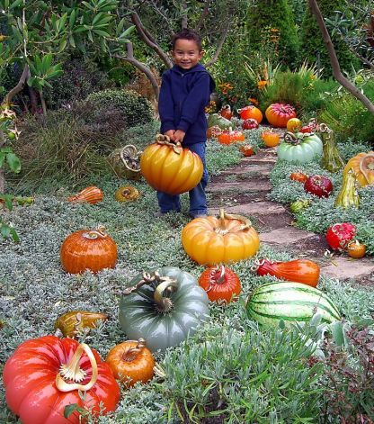 The Glass Pumpkin Patch features a crop of hundreds at Cohn-Stone Studios in Richmond. Photo: Cohn-Stone Studios / SF