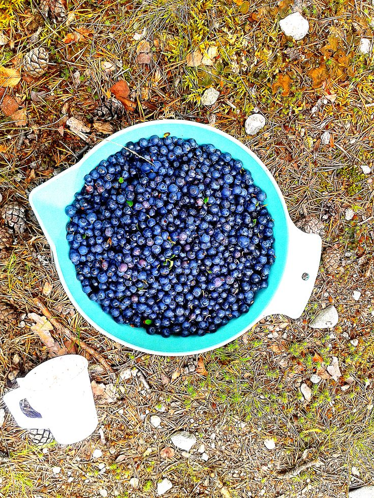 Blueberries - yummy!