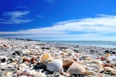 Captiva Island, Florida. Some of the best shelling beaches in the world.