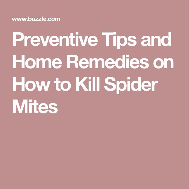 Preventive Tips and Home Remedies on How to Kill Spider Mites