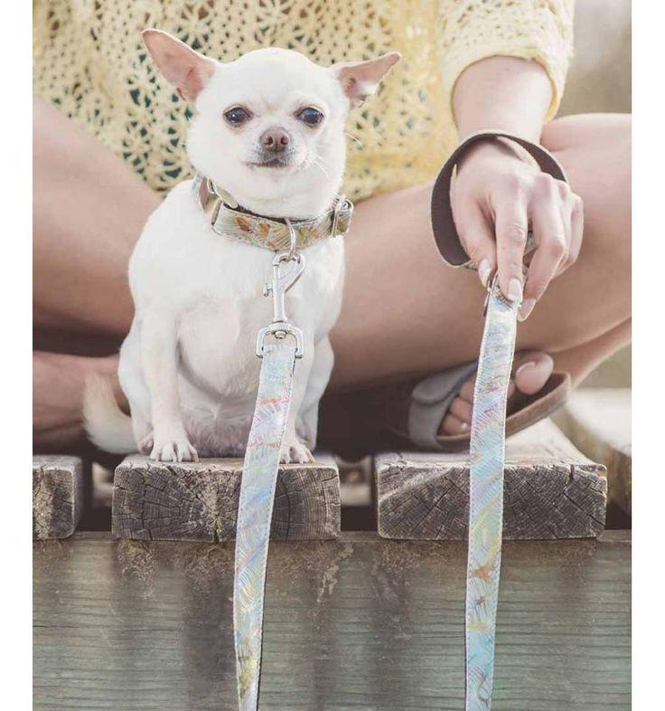 Collar para perro Brott textura Gelida