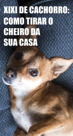 Xixi de cachorro: como tirar o cheiro da sua casa 2 soluções simples e eficazes com produtos que você tem em casa