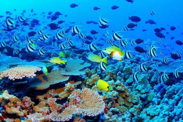 The Great Barrier Reef is the world's largest coral reef system.