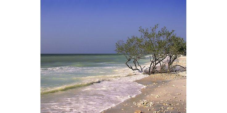 Honeymoon Island, Florida [explored!]