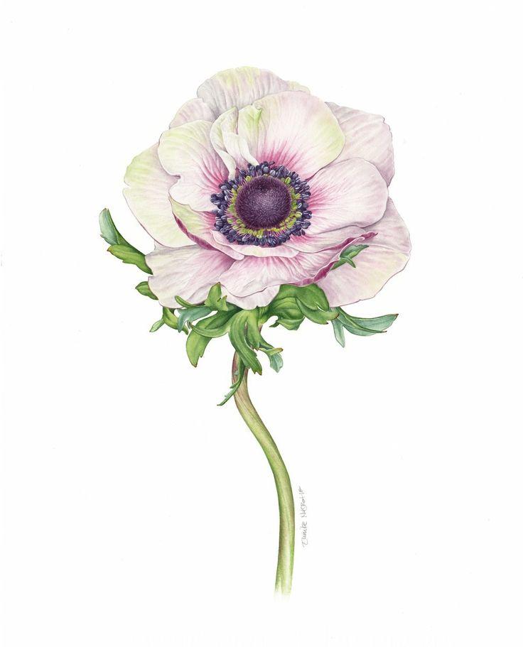 https://www.behance.net/gallery/23926201/Botanical-Fashion-Story-Sueddeutsche-Zeitung-Magazin