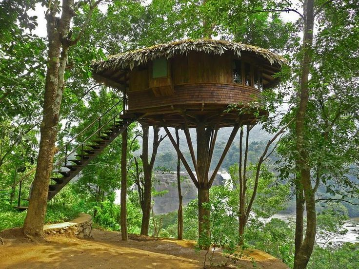 Really Cool Tree Houses 9 best tree houses images on pinterest | treehouses, architecture