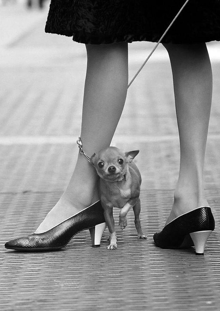 Photo: Yael Joel, 1961.