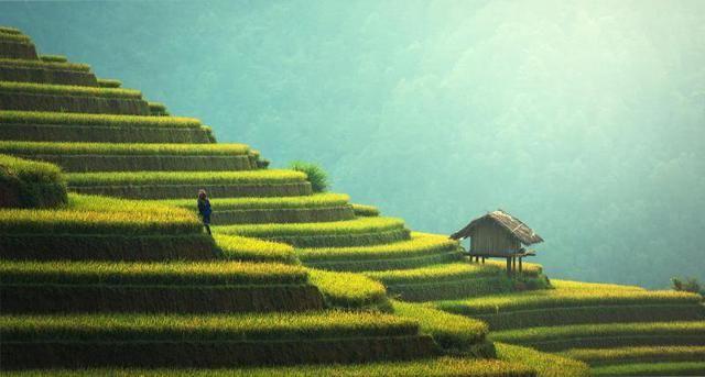 """Si chiama """"Greenery"""" ed è un verde luminoso e brillante, che fa pensare alla natura più selvaggia e autentica dei paesi del Sud America e alle highlands scozzesi, ma anche alle piantagioni di tè in Sri Lanka e ai rigogliosi campi di riso della Cina"""