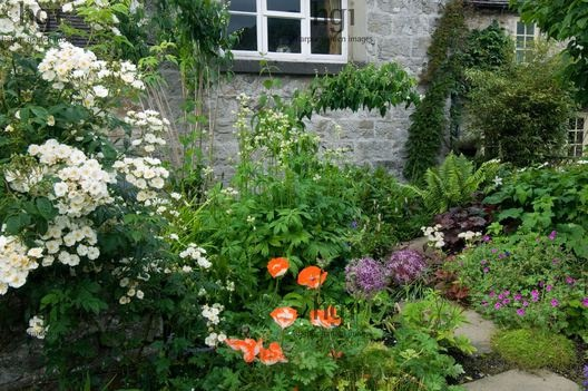 Harpur Garden Images :: slater91 Border beside house of Rosa rose Papver poppy Geranium allium Heuchera Astrantia major Design: David Stevens for Kevin Slater, Creamery Cottage, Parwich, Derbyshire, UK Jerry Harpur Border, house, Rosa, rose, Papver, poppy, Geranium, allium, Heuchera, Astrantia, major, Creamery Cottage, Parwich, Derbyshire,, UK, Jerry Harpur,