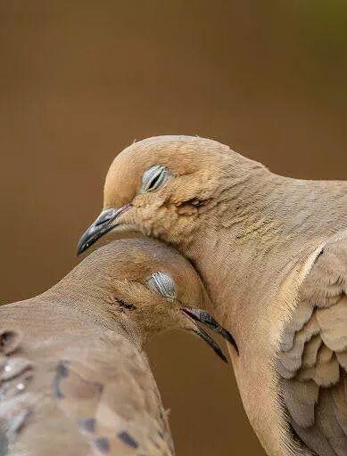 Amor de verdade tem carinho