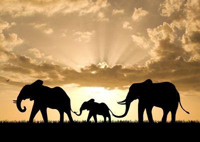 Elephants & sunsets