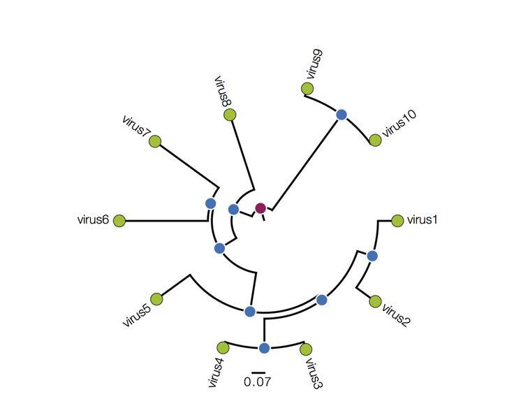 Best 25 Phylogenetic Tree Ideas Eukaryotic